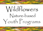 Wildflowers Nature School