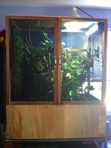 Veiled Chameleon With Cage And All Supplies 100 To Good Home