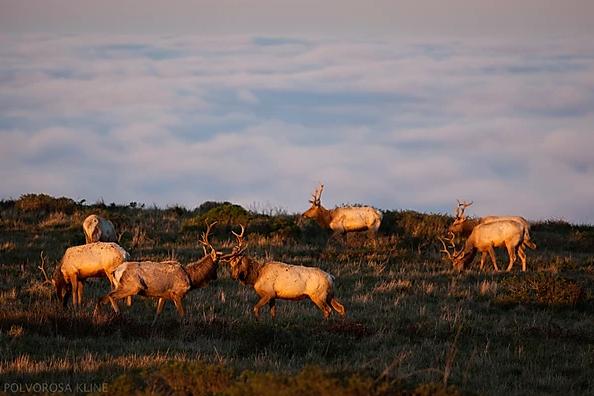 Name:  elk.png Views: 943 Size:  329.6 KB