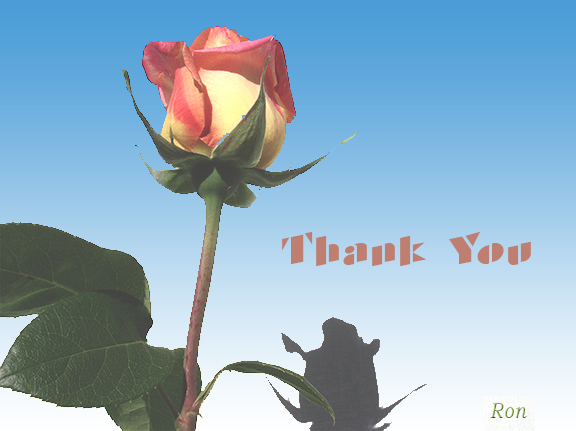 Name:  Rose-Thank-You.jpg Views: 964 Size:  122.8 KB