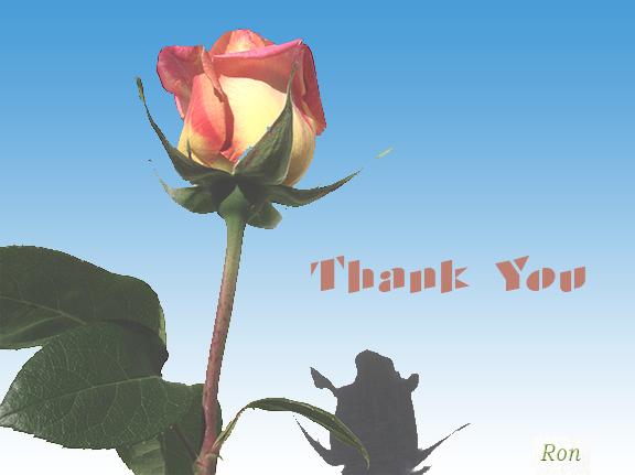 Name:  Rose-Thank-You.jpg Views: 924 Size:  122.8 KB