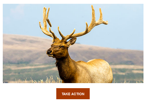 Name:  ALDF petition.png